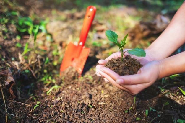 Immagine del primo piano delle mani che tengono e preparano un piccolo albero con il terreno per crescere in giardino