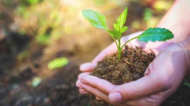 Immagine del primo piano delle mani che tengono il piccolo albero con terreno per crescere con lo sfondo della natura