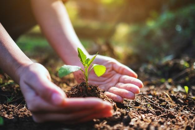 Immagine del primo piano di persone che tengono e piantano un piccolo albero su un mucchio di terra