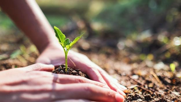 Immagine del primo piano di persone che si preparano a far crescere un piccolo albero con del terreno in giardino