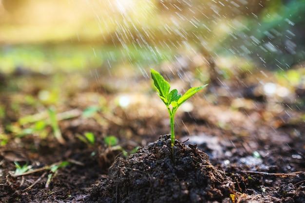 Immagine del primo piano di persone che innaffiano un piccolo albero su un mucchio di terra in giardino