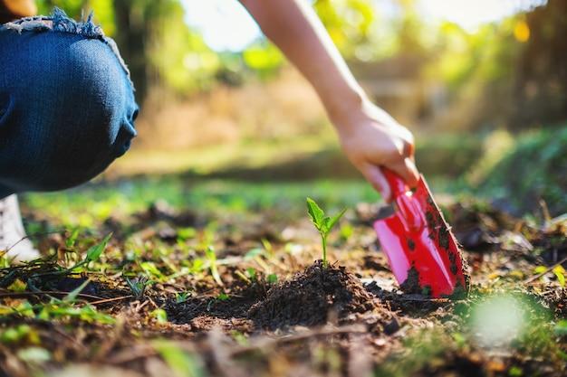 Immagine del primo piano di una donna che usa la pala per piantare un piccolo albero in giardino