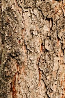 Macro fondo asciutto a macroistruzione di struttura della corteccia di albero