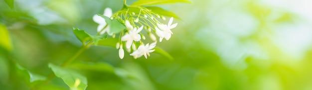 Primo piano di mini fiore bianco sotto la luce del sole con spazio di copia utilizzando come sfondo il paesaggio di piante naturali, concetto di copertina di ecologia.