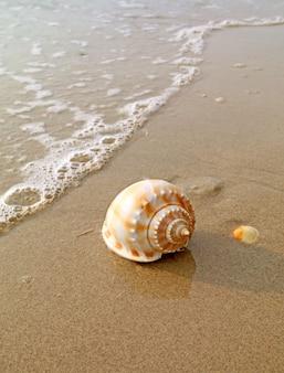 Primo piano una conchiglia di mare scotch bonnet naturale isolata sulla spiaggia di sabbia bagnata al sole