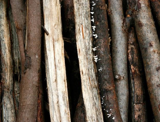 Struttura della natura del primo piano del legno dell'eucalyptus