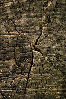 Vecchia struttura naturale del taglio del tronco di albero del primo piano