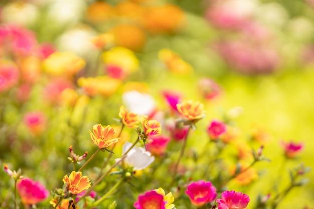 Primo piano di fiori arancioni e gialli e rosa sotto la luce del sole con spazio per le copie