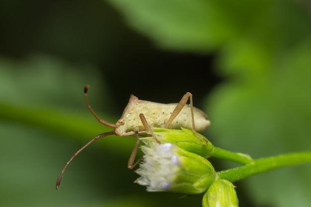 Foto del primo piano degli insetti di assassino marroni sulla foglia