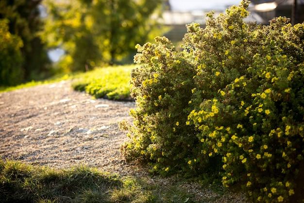 Primo piano di cespugli verdi illuminati dal sole serale in un bellissimo parco