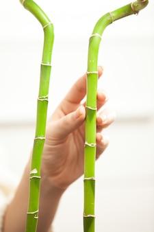 Primo piano di due bambù e mano che li tocca