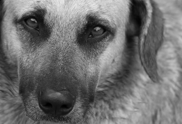 Primo piano del cane triste alla ricerca.