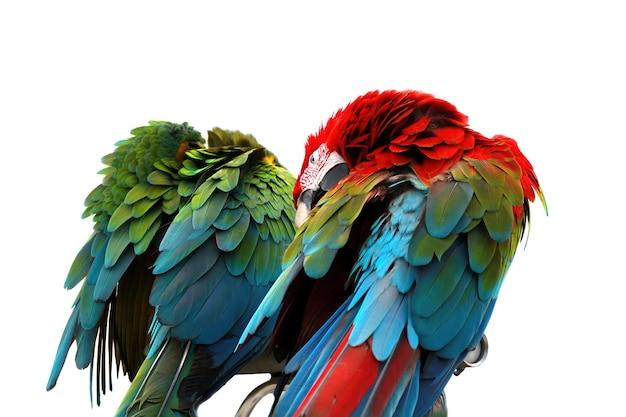 Primo piano di un macaw scarlatto dalla vista posteriore