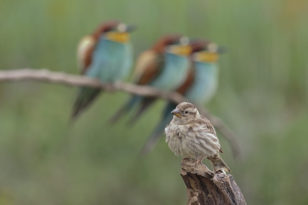 Colpo di messa a fuoco selettiva del primo piano di bellissimi uccelli Foto Premium