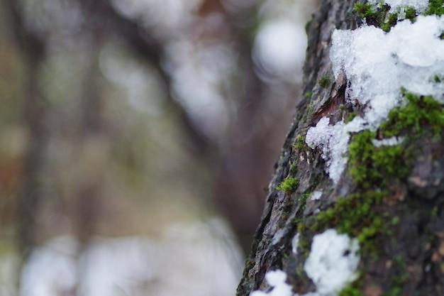Primo piano del fuoco selettivo colpo di un tronco di albero congelato