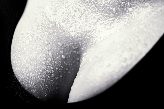 Primo piano del seno femminile sexy in reggiseno nero. tette sexy. primo piano del seno della ragazza che presenta il suo reggiseno. donna con grandi tette naturali sexy in lingerie. chirurgia plastica. bianco e nero.