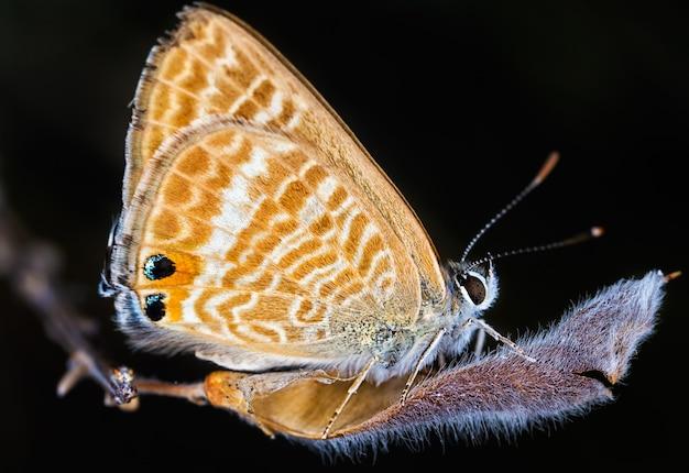 Colpo del primo piano di una bellissima farfalla su un'oscurità