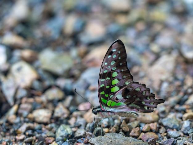 Colpo del primo piano di una bellissima farfalla in natura