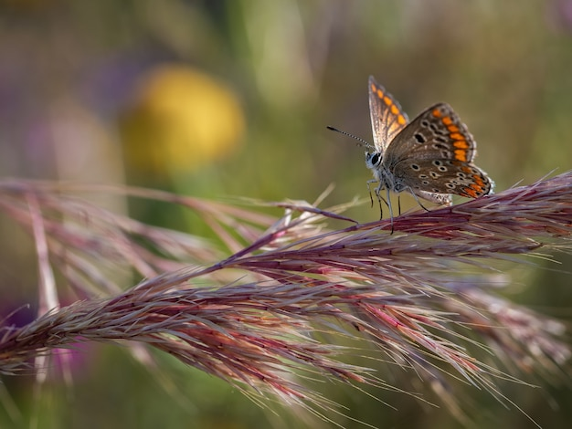 Colpo del primo piano di una bellissima farfalla fotografata nel suo habitat naturale