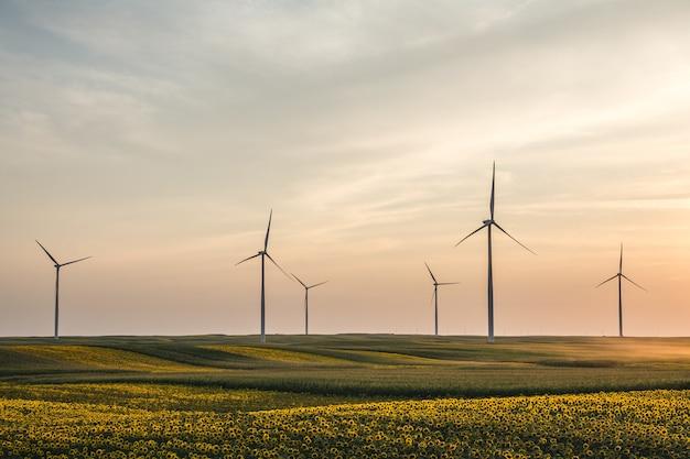Primo piano di bellissimi girasoli e turbine eoliche in un campo