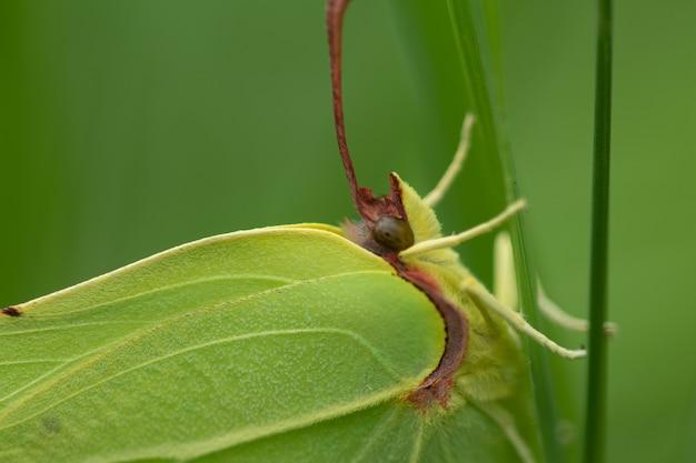 Primo piano di uno zolfo su una pianta