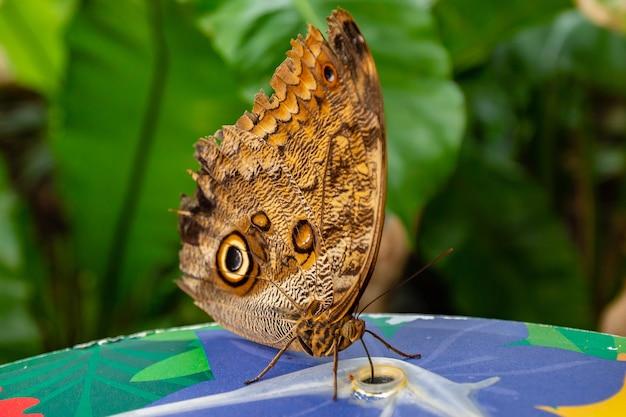 Primo piano di una farfalla su uno sfondo sfocato