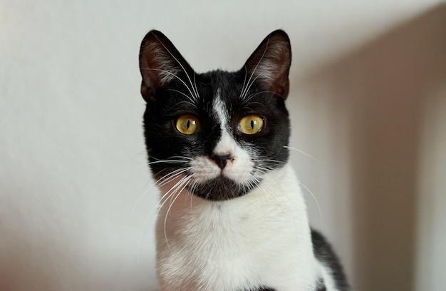 Un colpo di primo piano di un simpatico gatto bianco e nero con gli occhi gialli luminosi