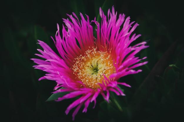 Colpo del primo piano di un fiore carino su una parete scura