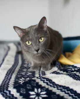 Un primo piano di un simpatico gatto grigio con gli occhi verde brillante