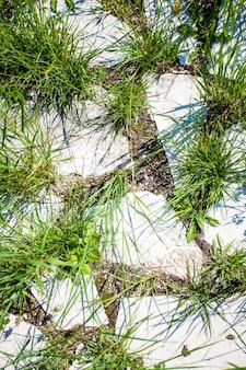 Colpo del primo piano di erba che cresce attraverso rocce di granito bianco