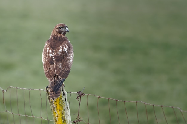 Primo piano di un uccello falco