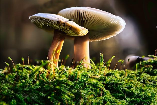 Colpo del primo piano dei funghi che crescono durante il giorno