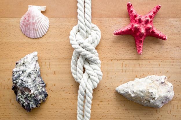 Primo piano di conchiglie, stelle marine e nodi da viaggi in barca a vela