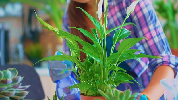 Primo piano di spruzzatura di piante d'appartamento in cucina a casa. usando terreno fertile con pala in vaso, vaso di fiori in ceramica bianca e fiori preparati per il reimpianto per la decorazione della casa curandoli.