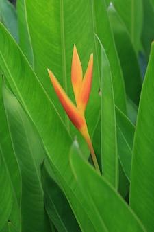 Primo piano del fiore di strelicia
