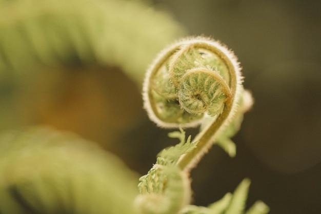 Primo piano di una pianta aggrovigliata su superficie vaga