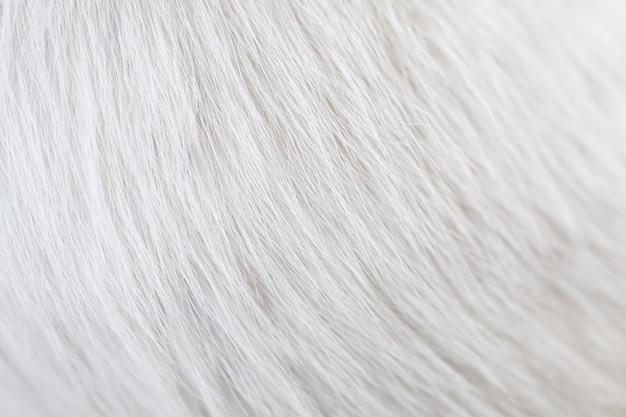 Primo piano della pelle dei peli bianchi del gatto di struttura. usando come sfondo o sfondo.