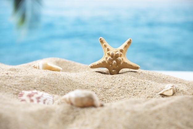 Primo piano di una minuscola stella marina nella sabbia su uno sfondo tropicale di una palma e dell'oceano