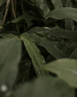 Primo piano di foglie tropicali con gocce d'acqua