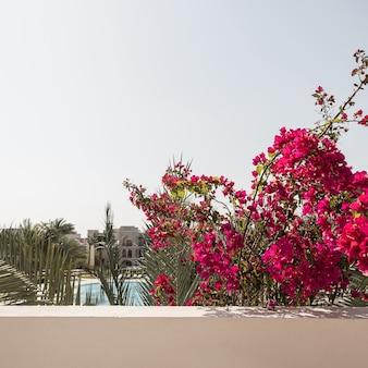 Primo piano della pianta tropicale con bellissimi fiori rossi e foglie verdi vicino all'edificio beige e al cielo blu blue