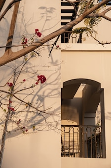 Primo piano della pianta tropicale con bellissimi fiori rossi vicino al muro beige
