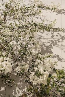 Primo piano della pianta tropicale con bellissimi fiori bianchi e foglie verdi vicino al muro beige con ombre di luce solare