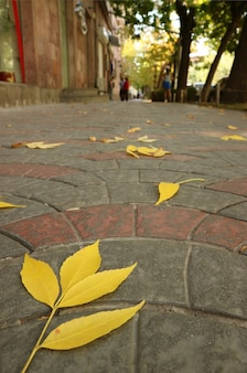 Foglie di autunno giallo vibrante del primo piano cadute sul marciapiede