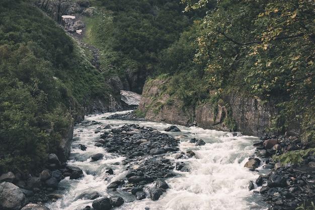 Primo piano vista fiume scena nella foresta, parco nazionale di dombay, caucaso, russia, europa. paesaggio estivo, tempo soleggiato e giornata di sole