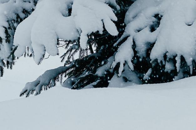 Vista del primo piano dell'albero di abete innevato nel campo di neve morbida delle nevicate fiocchi di neve in motion blur