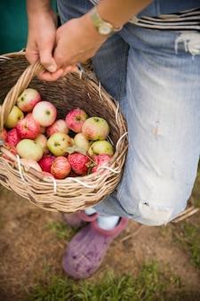 Primo piano di un cesto vintage con mele biologiche appena raccolte nelle mani di una donna