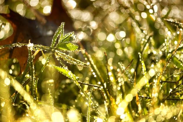 Primo piano di gocce d'acqua dalla rugiada sulle piante illuminate dalla luce solare