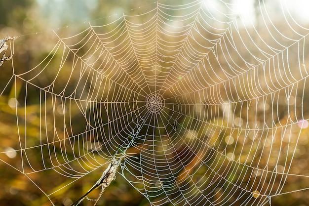 Primo piano del web con un ramo in esso e gocce di rugiada luminose che brillano sotto la luce del sole