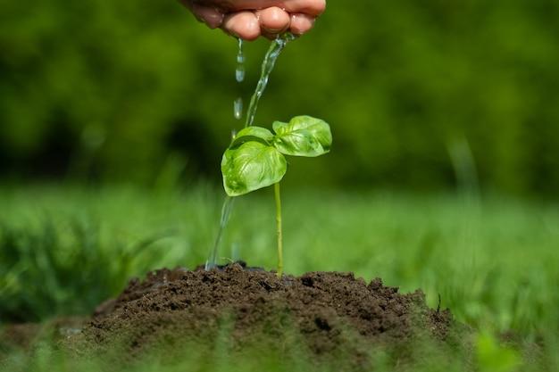 Giovane pianta d'innaffiatura della mano della donna del primo piano su suolo fertile