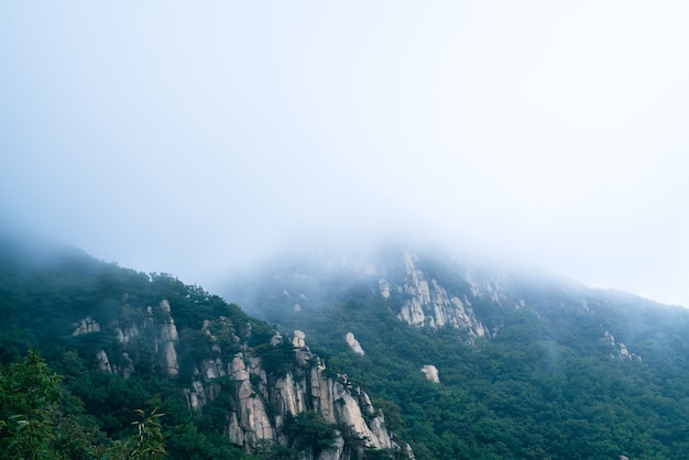 Nuvole e nebbia nel parco